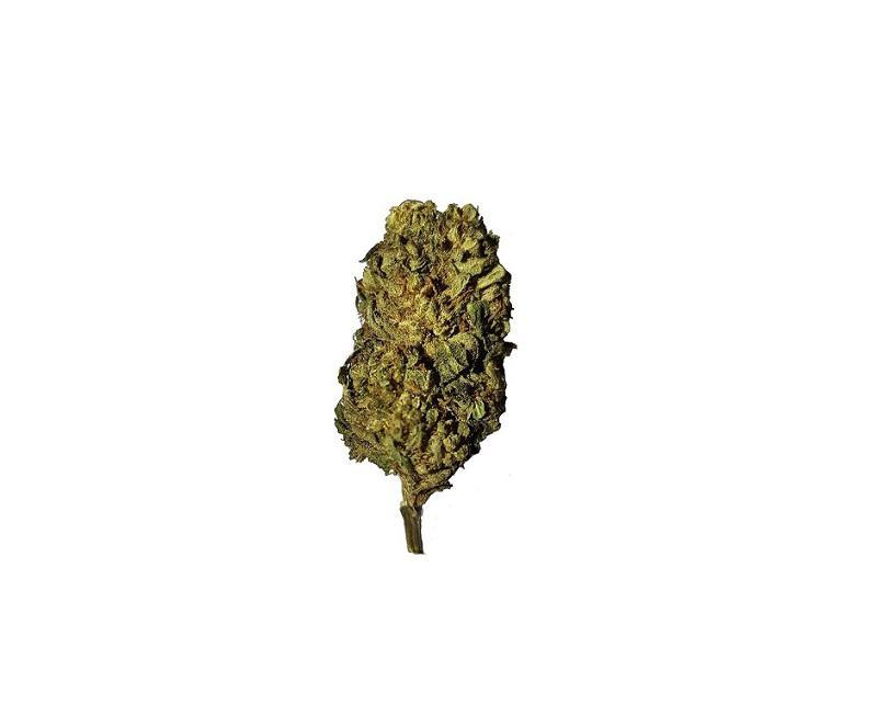 Orange Bud 10 G